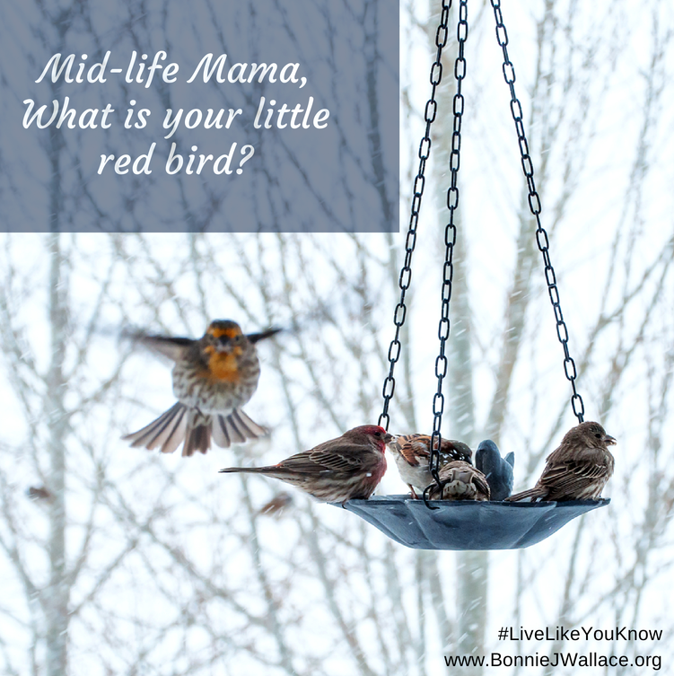 Mid-life Mama, What is your little red bird- (1)